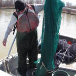 The otter trawl is a standard gear that we use for our population sampling.